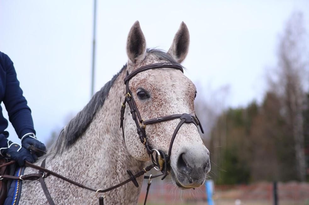 Hästbacka